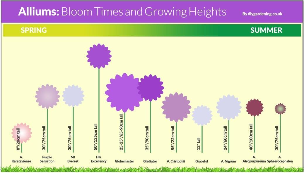 Allium bloom time chart