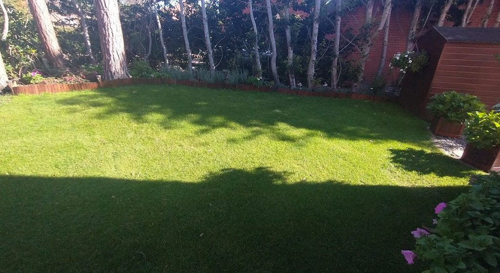 Our lawn in autumn
