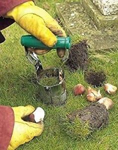 Allium bulb planter