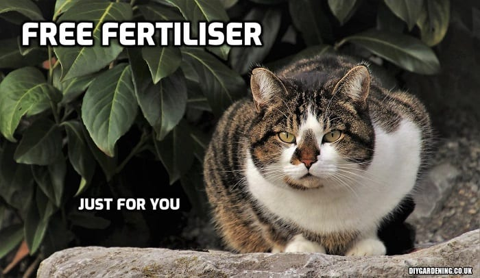 Free garden fertiliser cat meme