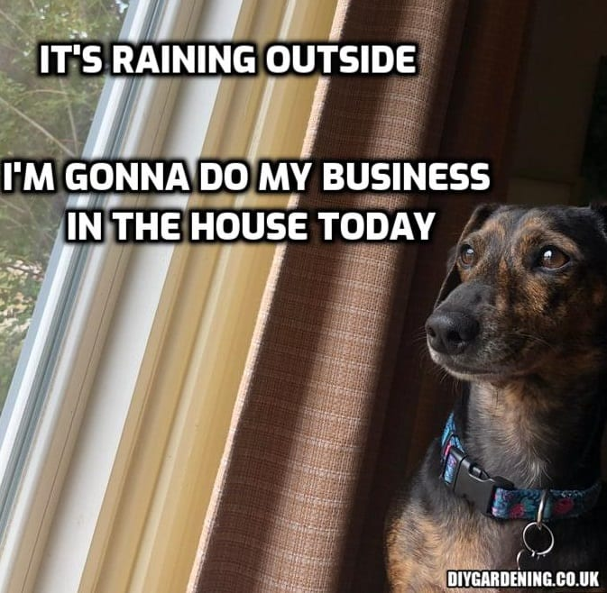 Dog looking out of window meme