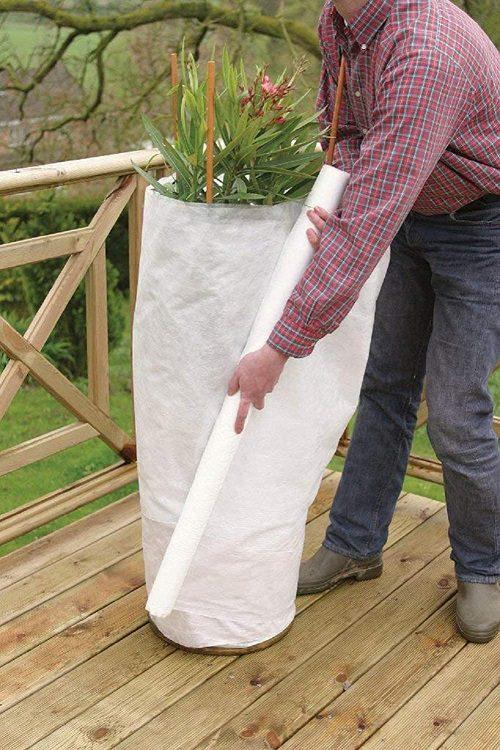 Fleece wrap to protect hydrangeas