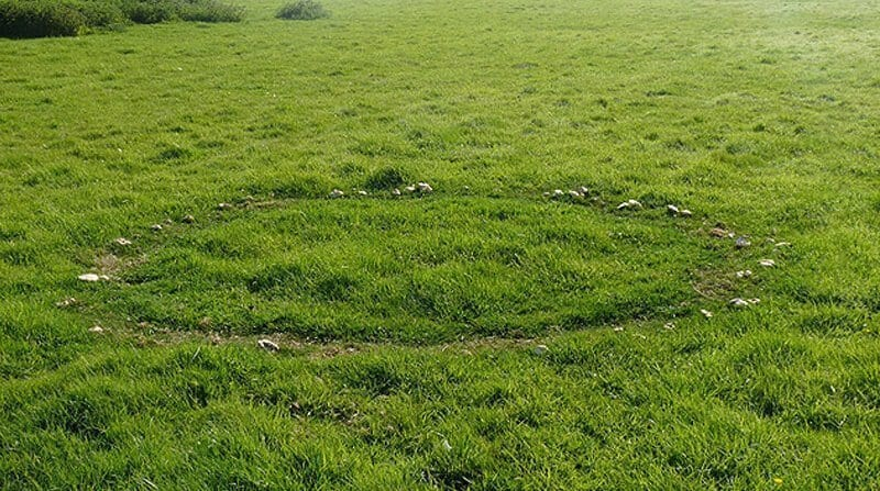 Fairy rings in lawn