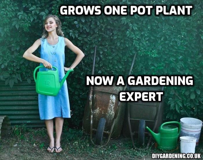 Gardening expert meme