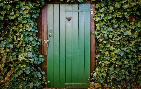 Ivy growing around door