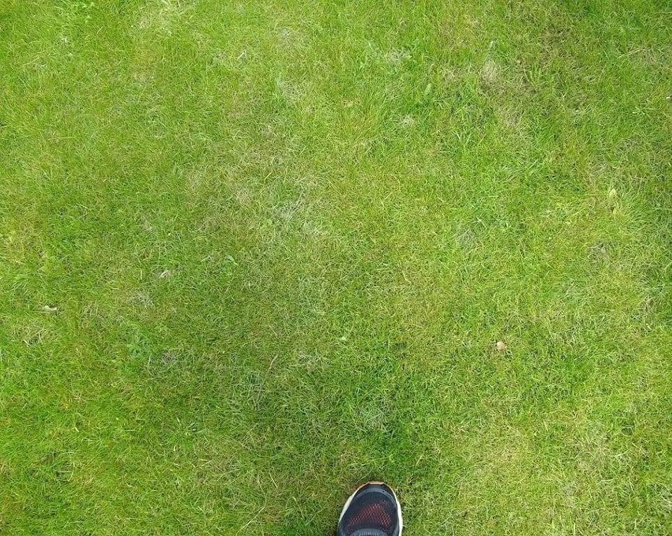 Closeup of our lawn