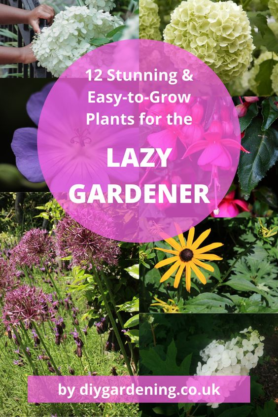 Plants for lazy gardeners