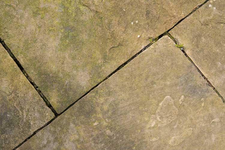Lichen on patio slabs