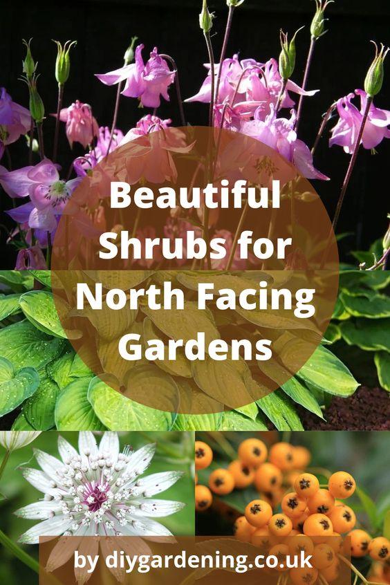 North facing garden plants