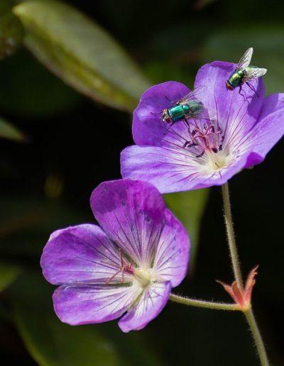 Two purple flowers - 2cm in length