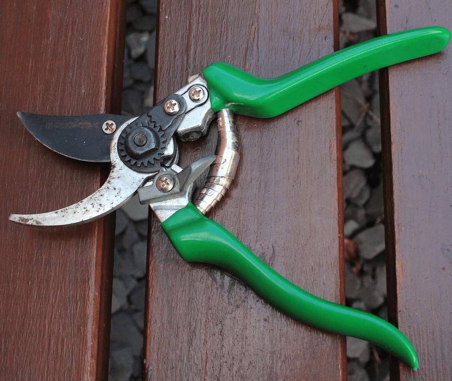 Gruntek secateurs for pruning hydrangeas