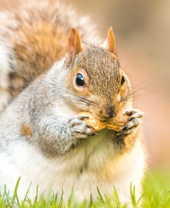 What Do Squirrels Eat? – A Guide to Feeding Squirrels