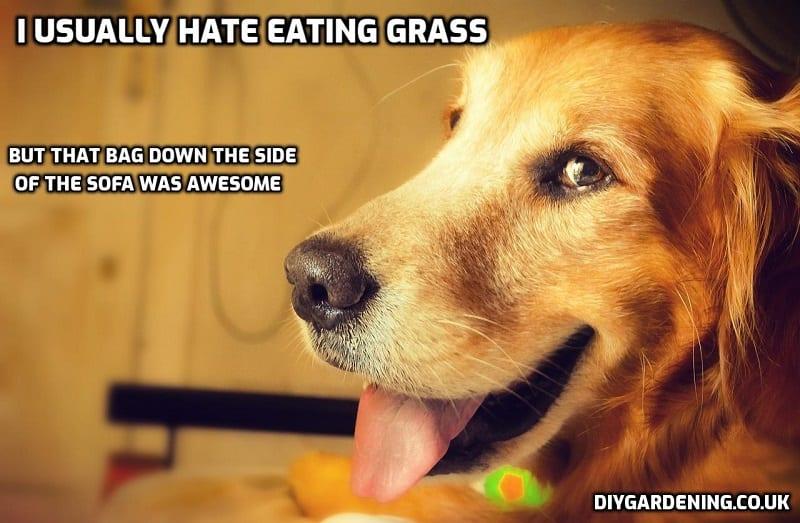 Stoned dog free meme