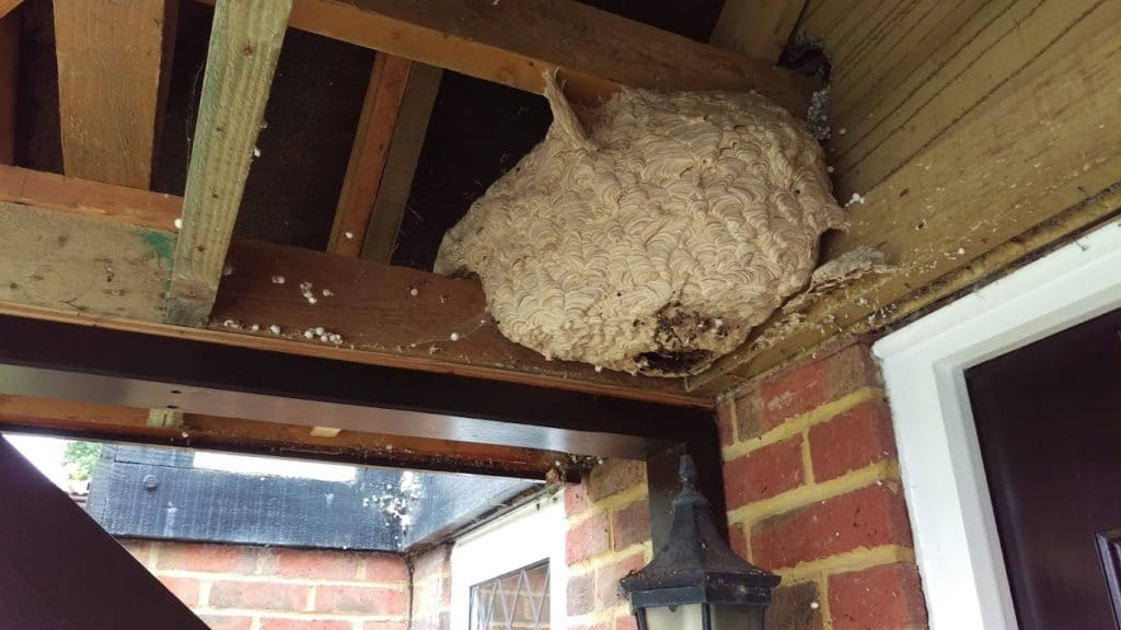 Wasp nest in porch