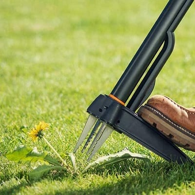 Lawn weed removal tool