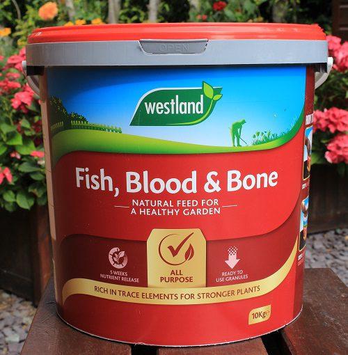 Westland's fish, blood and bone fertiliser for dahlias