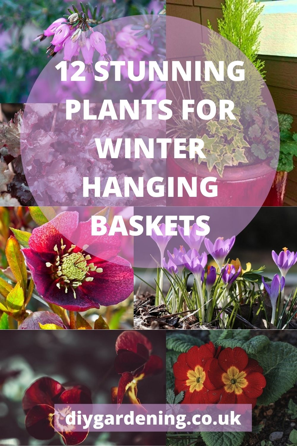 How to create stunning winter hanging baskets